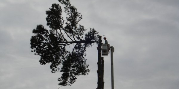 Cracks Can Cause Hazards in Trees