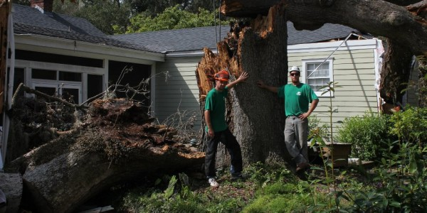 Did A Storm Damage Your Tree?