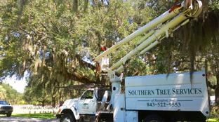 stump removal/ www.treecareeverett.com